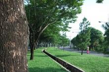 Taman dan pepohonan di sisi-sisi jalan